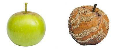 Rotten apples in sales